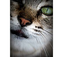 Beautiful Green Eyed Cat Photographic Print