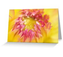 Pink and Yellow Dahlia, As Is Greeting Card