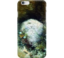 Star Eye Hermit Crab iPhone Case/Skin
