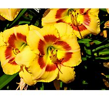 Day Lily Garden Photographic Print