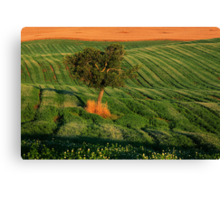 Val d'Orcia Tree Canvas Print