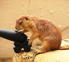 Prairie Dog by angbet31