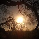 Tangled Branches in SIlhouette by Keith Stephens