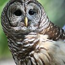 A Beautiful Owl by Missy Yoder