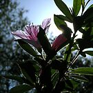 Another Small Pink Flower by Keith Stephens
