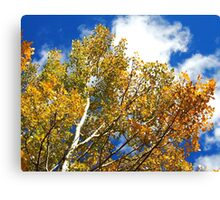 Blue Rocky Mountain Skies and Golden Aspen Trees in fall Canvas Print