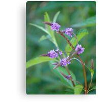 Pretty Purple Plant-Verbenaceae Canvas Print