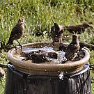 Community Bathing by Barb Miller
