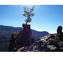Tree Essence of Strength Photographic Print