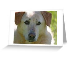 Bless Your Old Heart and Soul Jake - 1997-2010 Greeting Card