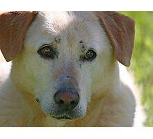 Bless Your Old Heart and Soul Jake - 1997-2010 Photographic Print
