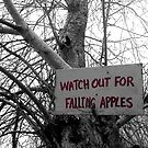 Watch Out For Falling Apples by Keith Stephens
