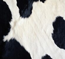 Cowhide Black and white by Gypsykiss