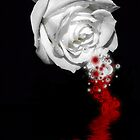 Bleeding Rose by SharonD