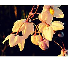 Bells-flowers Photographic Print