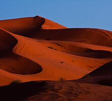 Sahara Twilight by Thomas Young