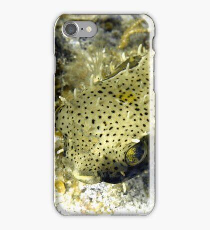 Bridled Golden Burrfish iPhone Case/Skin