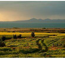 Bellarine Peninsula Photographic Print