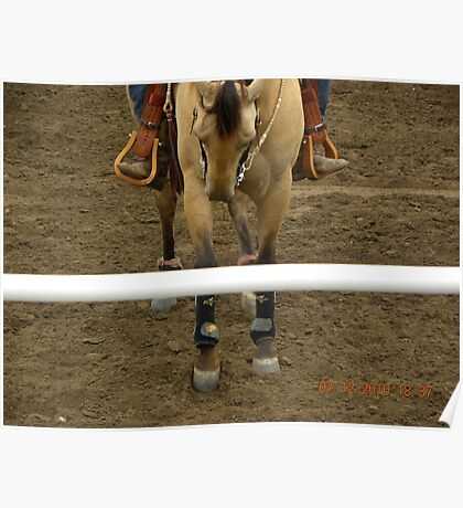 Hooves/Feet   Horse/ Rider Poster
