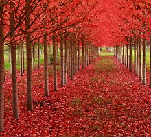 Spiritual Kloth Red Forestation by Kordial Orange by kordialorange