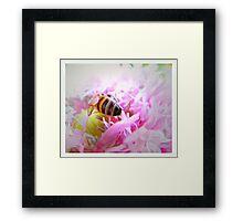 pollen drunk Framed Print