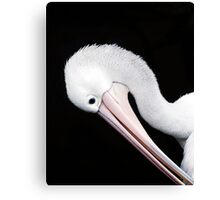 Curves - pelican portrait Canvas Print
