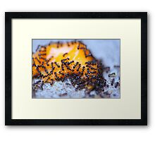 Cheese Ants by Kordial Orange Framed Print