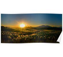 Sugar Cane Sunset, FNQ Poster