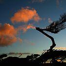 Wind Blown Coast by Joe Mortelliti