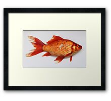 Goldfish Need Breaks Too by Kordial Orange Framed Print