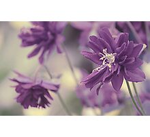 Vintage Purple Photographic Print