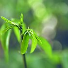 Green For Life - New Life Begins by Komang