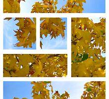 plantanus leaf collage - autumn by vampvamp