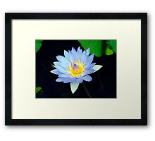 Blue - waterlilly Framed Print