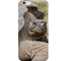 Dawn of the Tortoise  iPhone Case/Skin