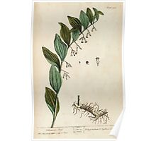 A curious herbal Elisabeth Blackwell John Norse Samuel Harding 1737 0640 Solomon's Seal Poster