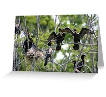 Adult Double Breasted Cormorants Greeting Card