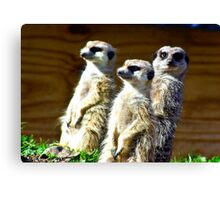 Three on Guard Canvas Print