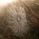 Morning Web by Karl Kruger