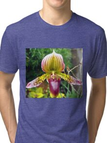 Purple and Yellow Orchid Tri-blend T-Shirt