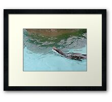Magestic Sea Lion Framed Print