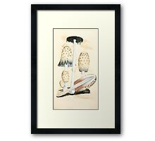 Coloured figures of English fungi or mushrooms James Sowerby 1809 0487 Framed Print