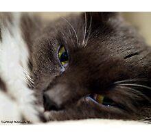 Here...Kitty....Kitty Photographic Print