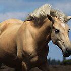 New Forest Pony by Anne Staub