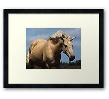 New Forest Pony Framed Print
