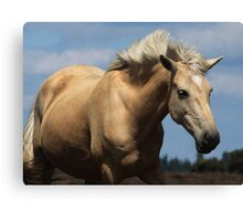 New Forest Pony Canvas Print