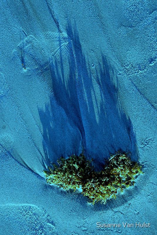 The Dream of the Ocean  by Susanne Van Hulst