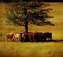 Too Hot For Cattle by Lee Donavon Hardy