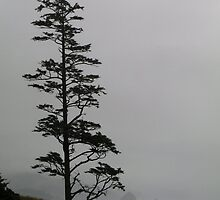 Tree At Ecola State Park by Tim Sousa