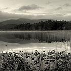 Dawn. by EvilTwin